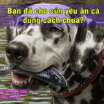 ban da cho cun yeu an ca dung cach chua 3