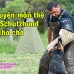 huan luyen mon the thao Schutzhund cho cho 4