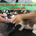huong dan cach cat tia mong chan cho cun yeu