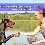 kinh nghiệm huấn luyện chó