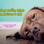 trieu chung nhiem benh Papillomavirus o cho 3